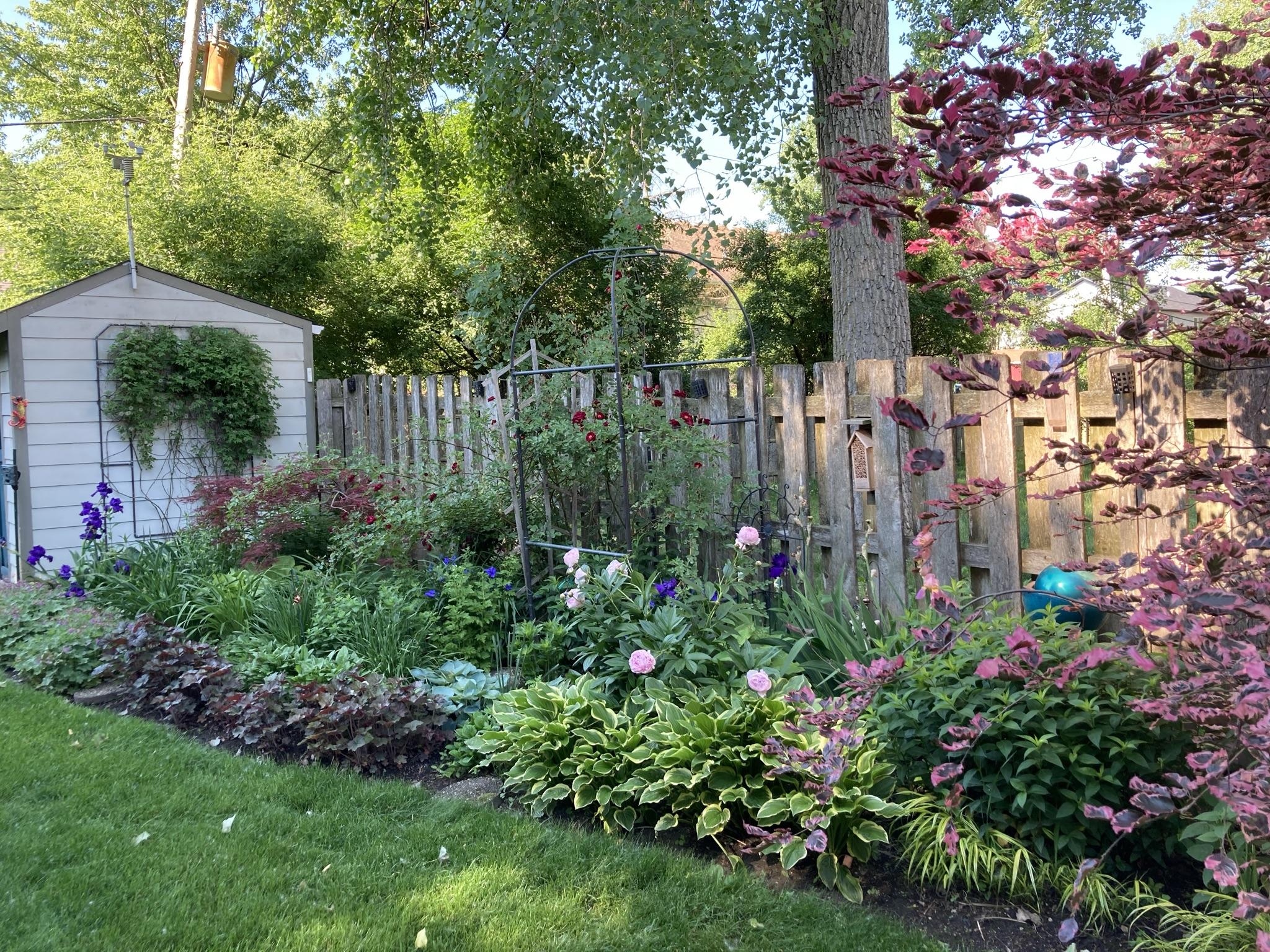 Narrow garden bed in summer