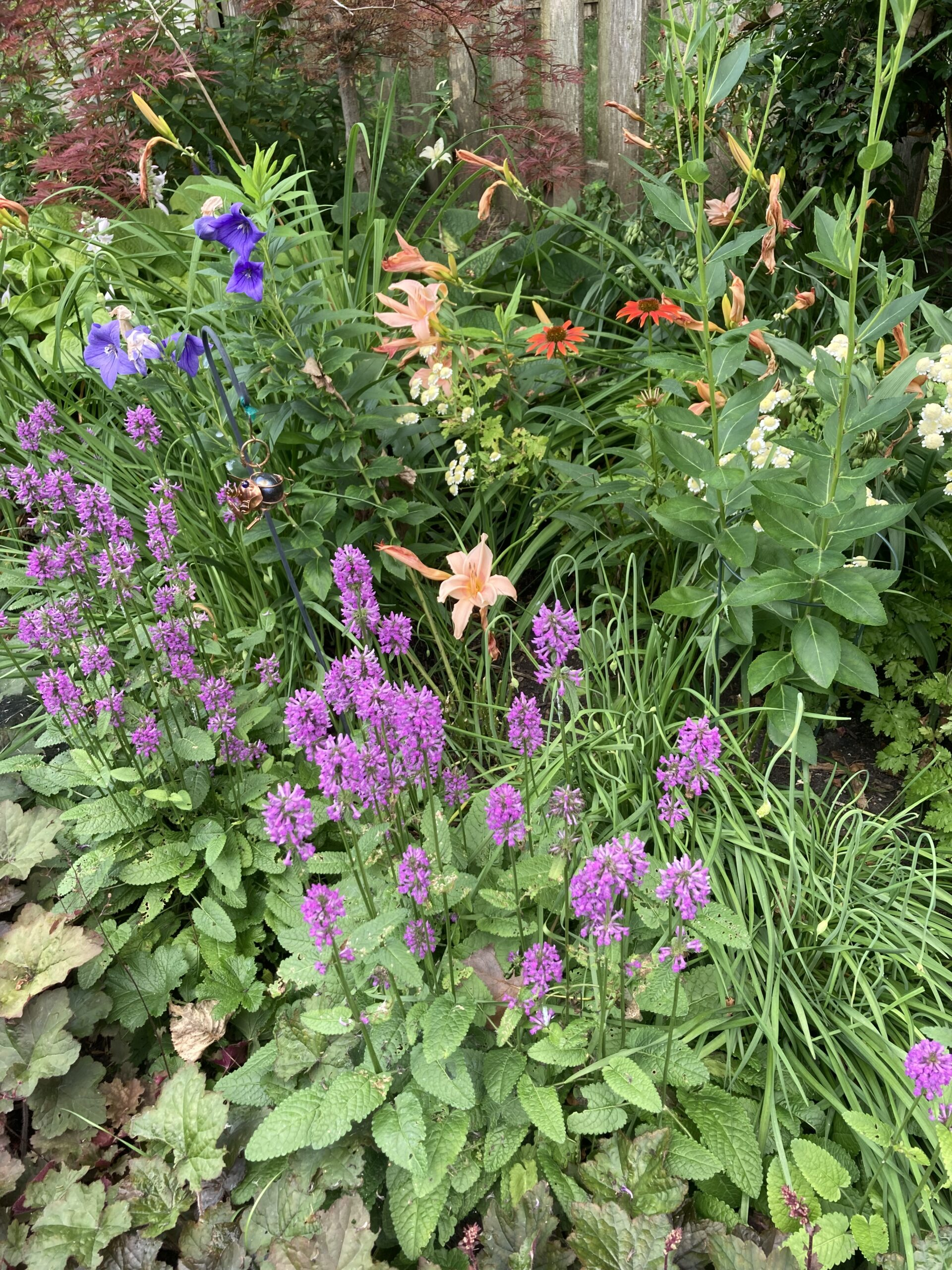 Flower combination on the garden bed