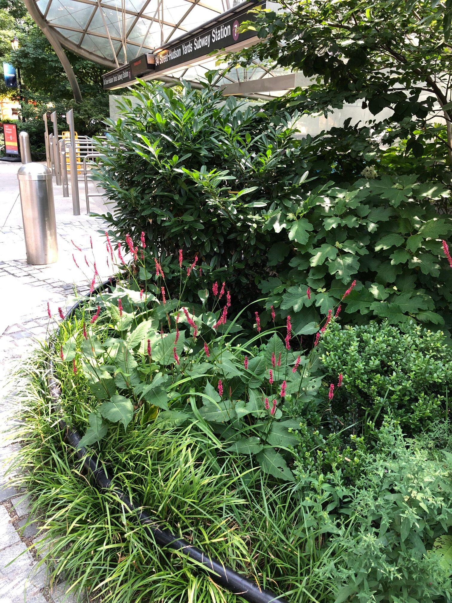 small garden bed in city garden