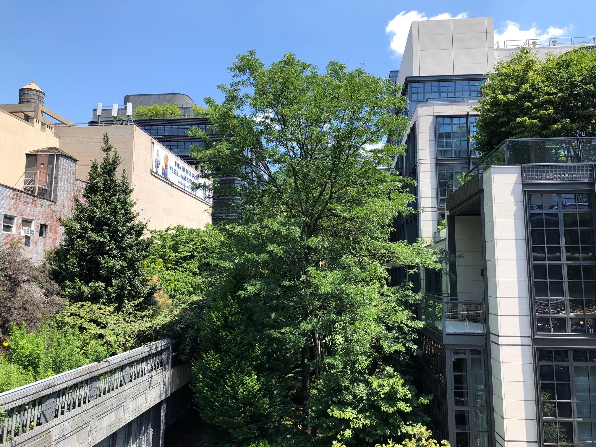 large tree growing between large buildings