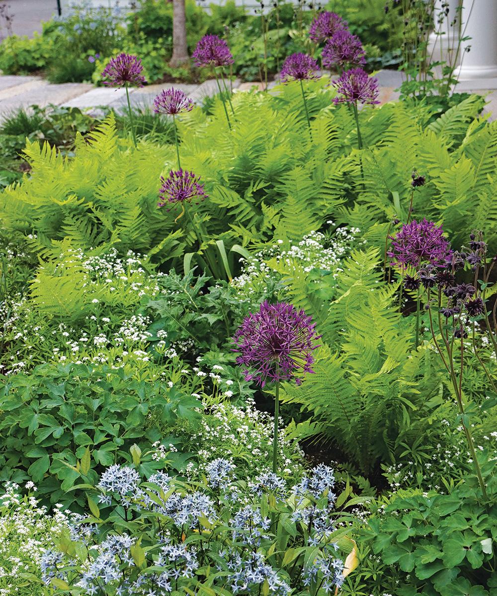 naturalistic shade garden