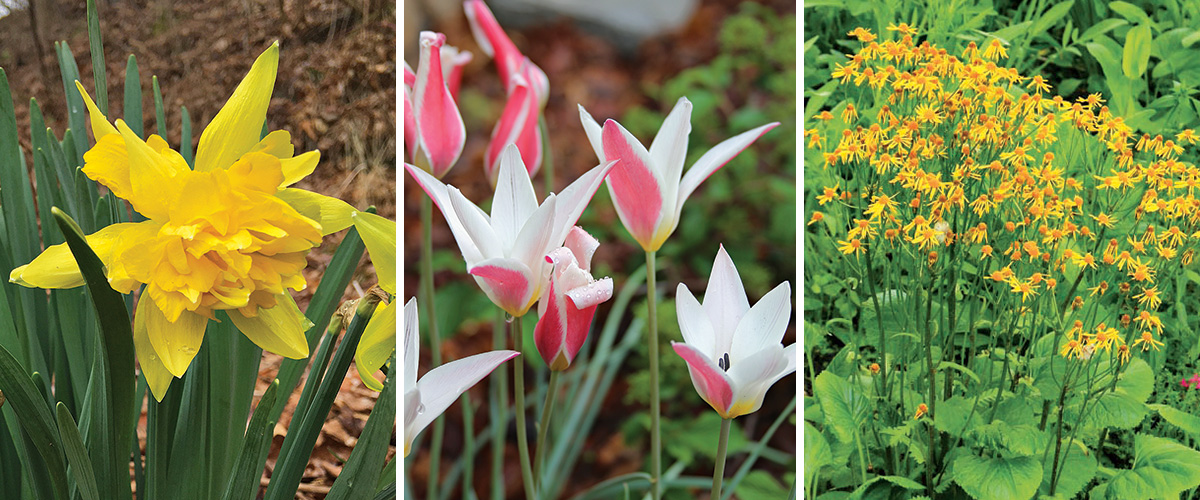 plants that bloom in april