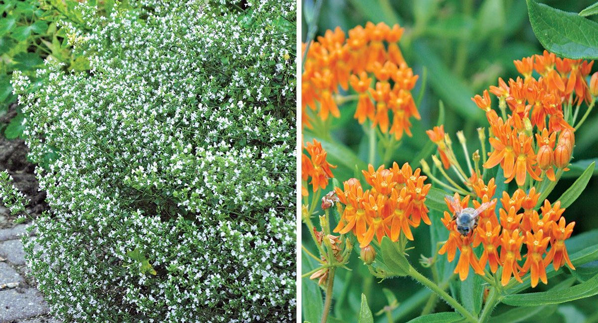 plants in bloom in june