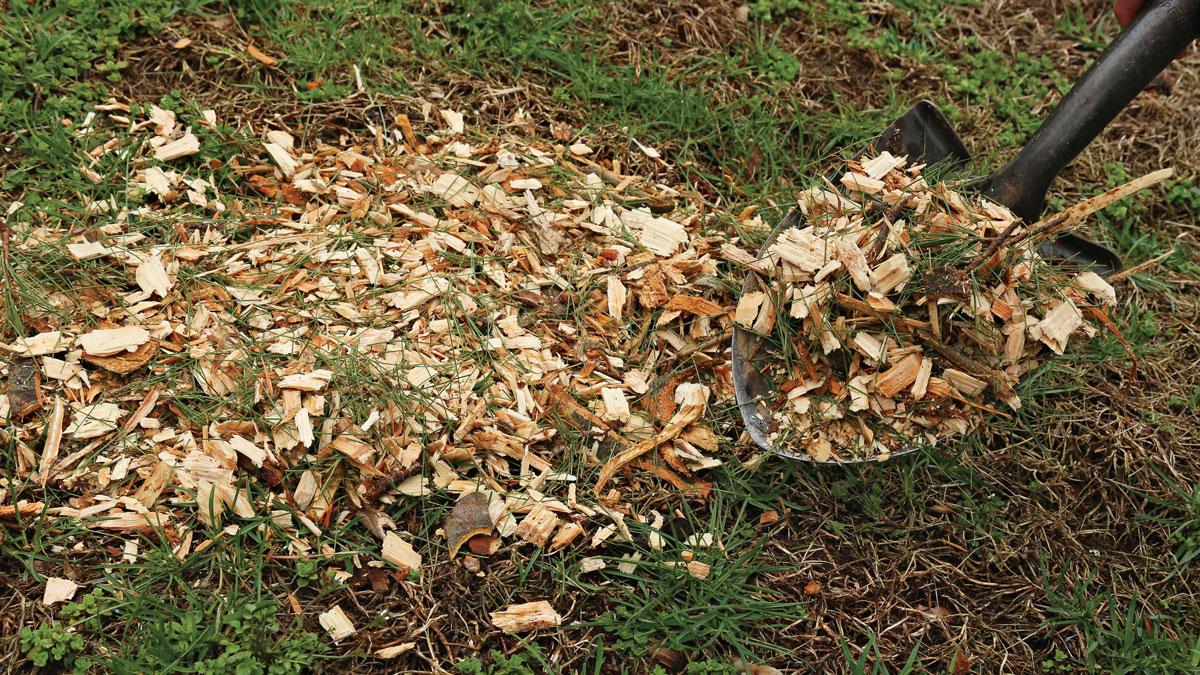 shoveling arborist chips