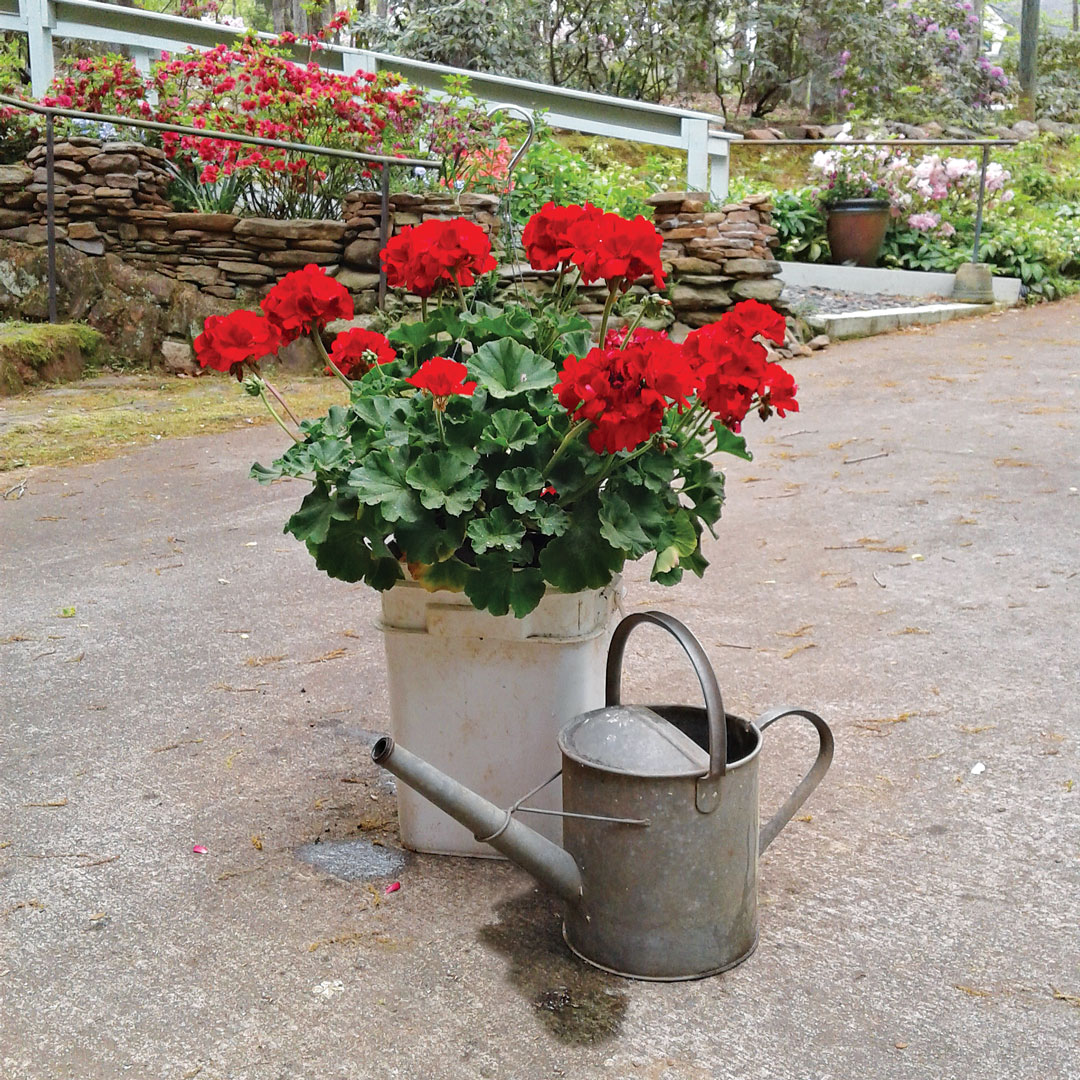watering can next to container of flowers