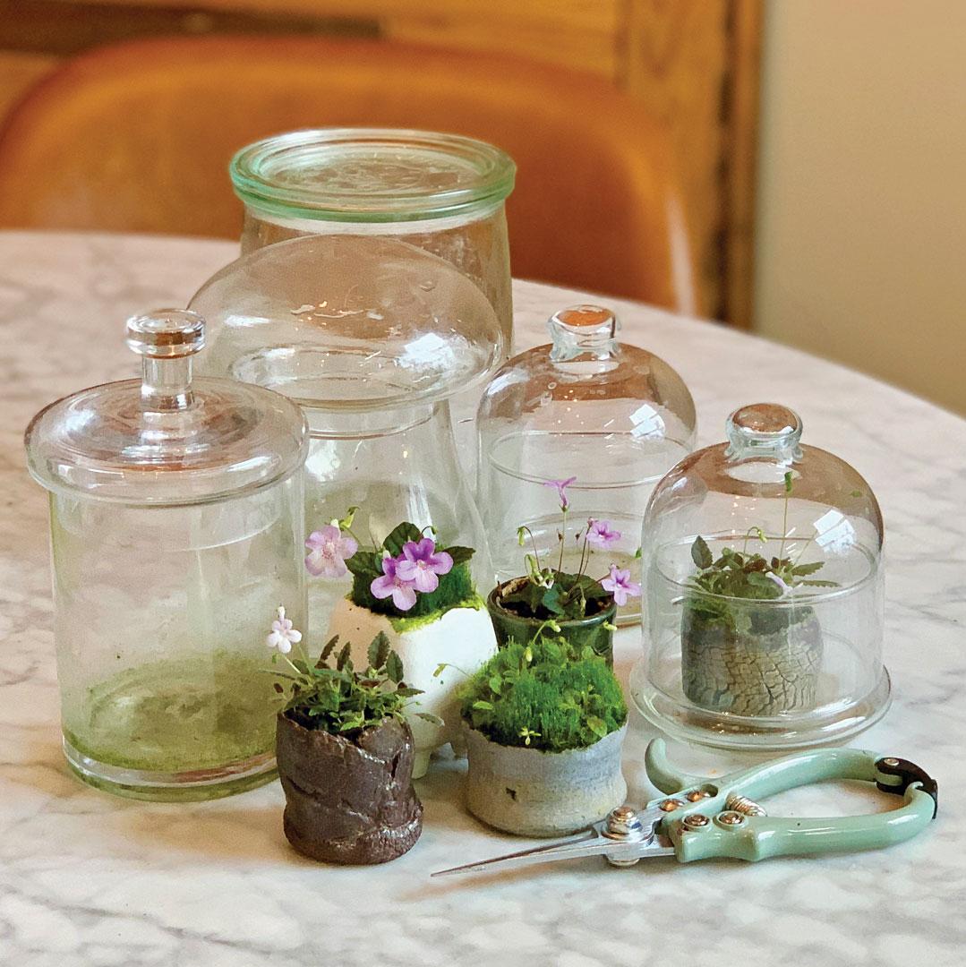 tiny houseplants in terrariums