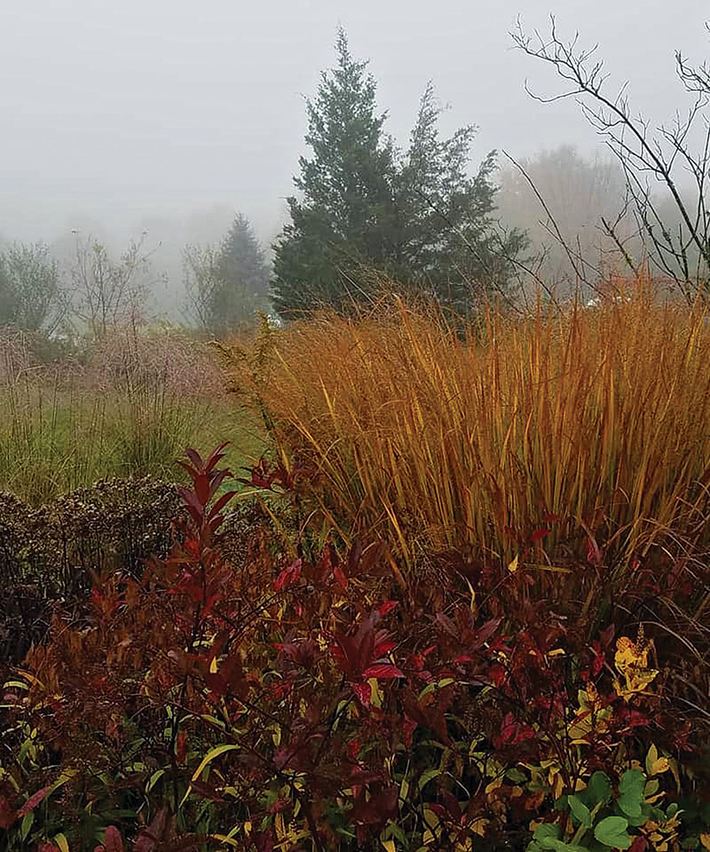 red and orange plants in fog