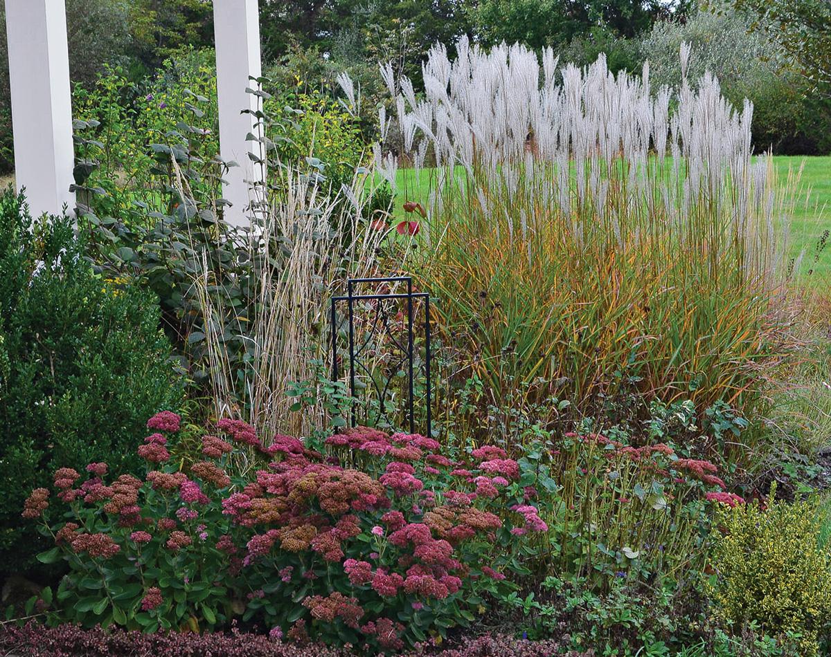 garden in early fall