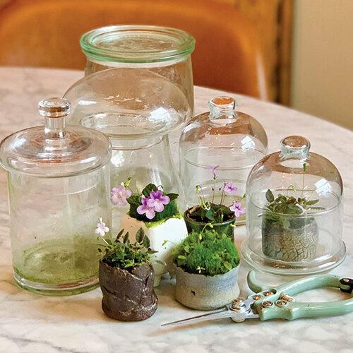 Petite Houseplants for Any Home