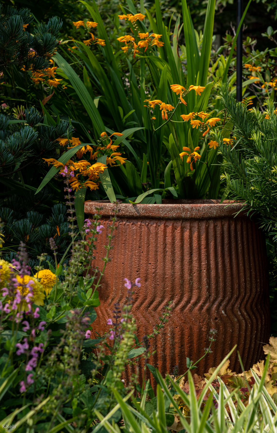 Large crimson container surrounded by perennials