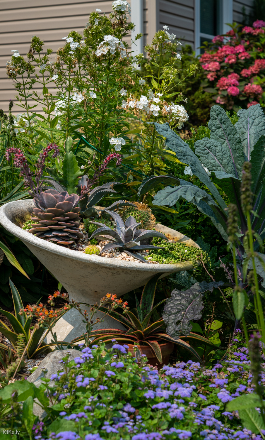 Succulents in an elevated bowl surrounded by plants