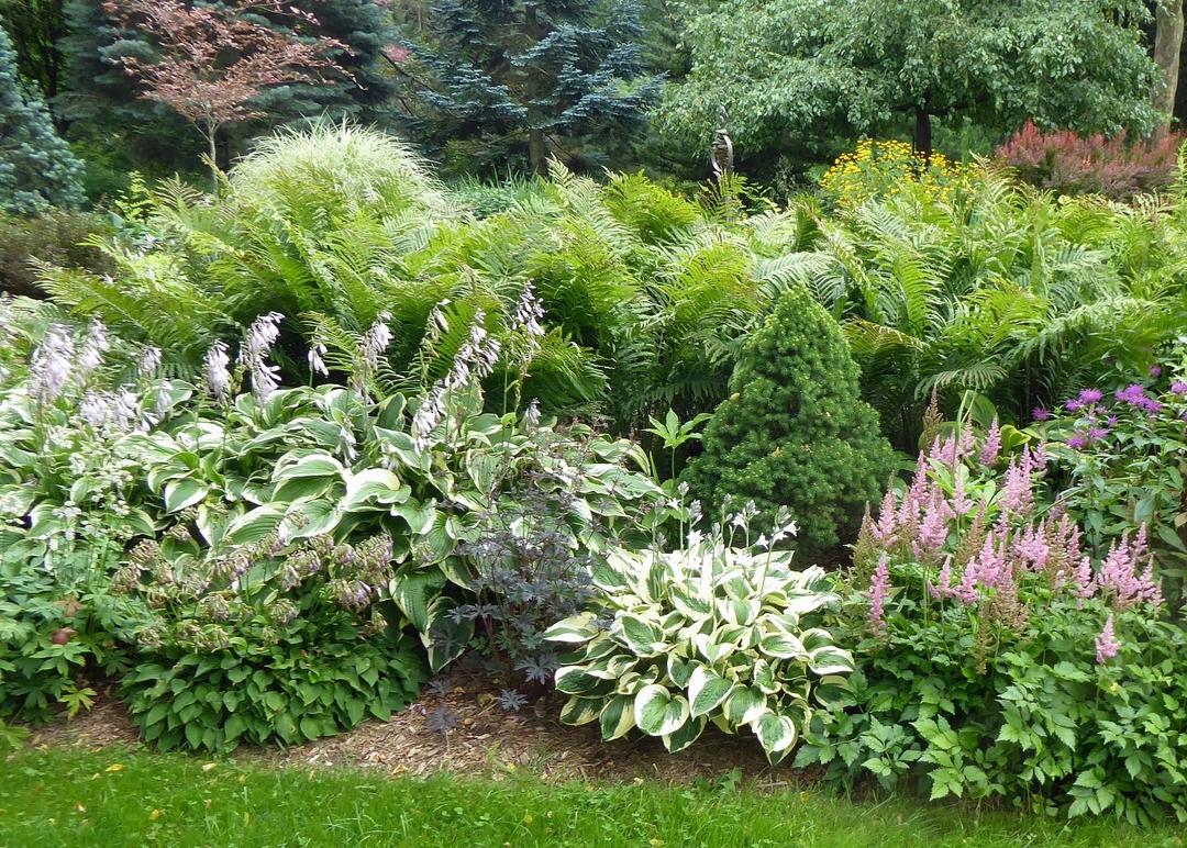 small conifer amongst various perennials