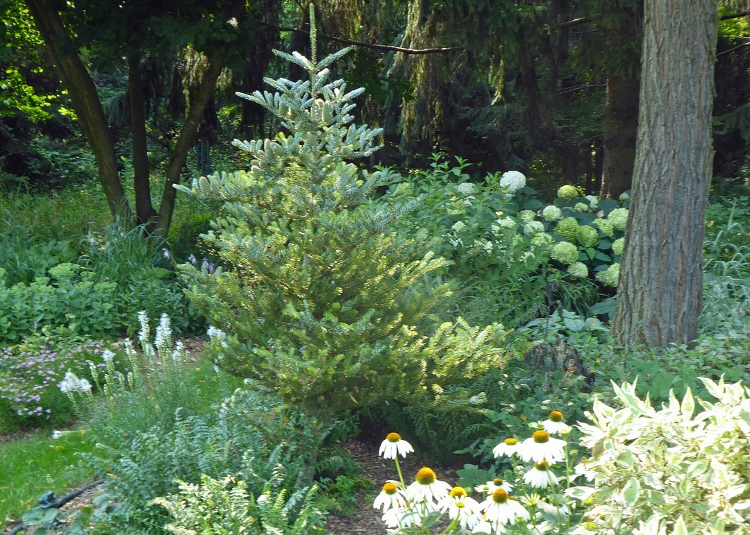 conifer surrounded by plants with white flowers