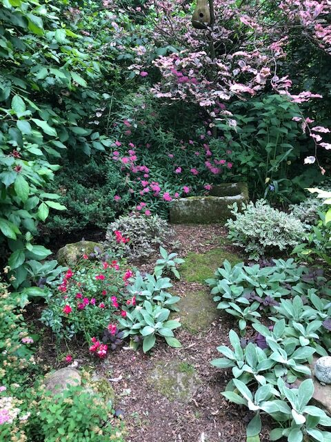 garden path full of pink flowers