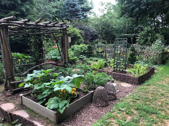 veggie garden with multiple raised beds