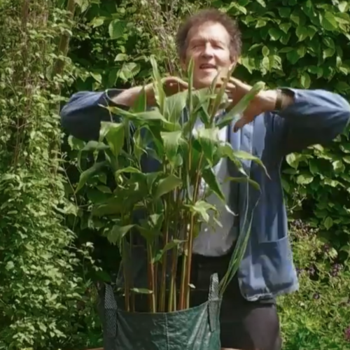 Monty Don plants a summer container