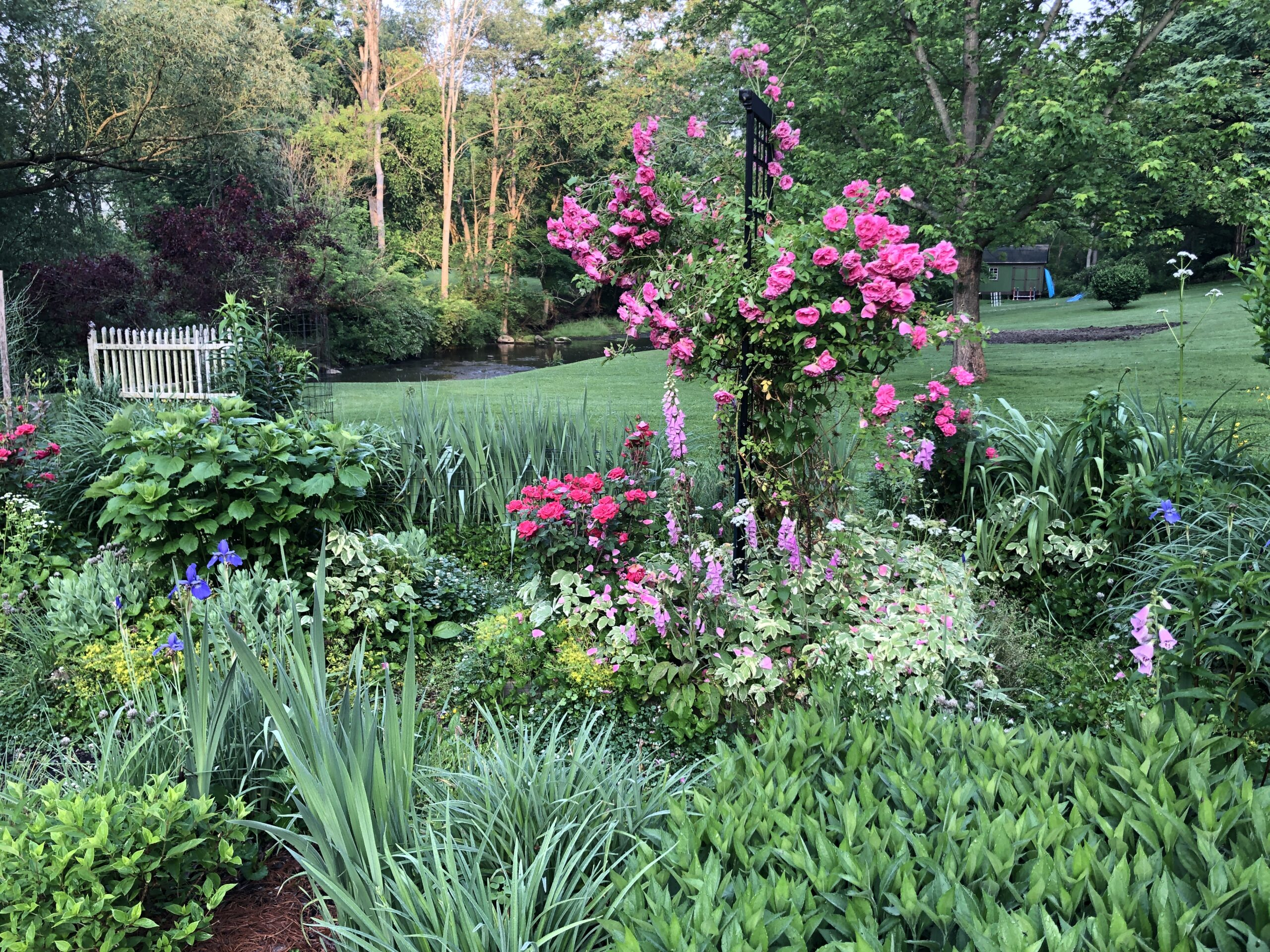 garden bed with bright pink climbing rose in the middle