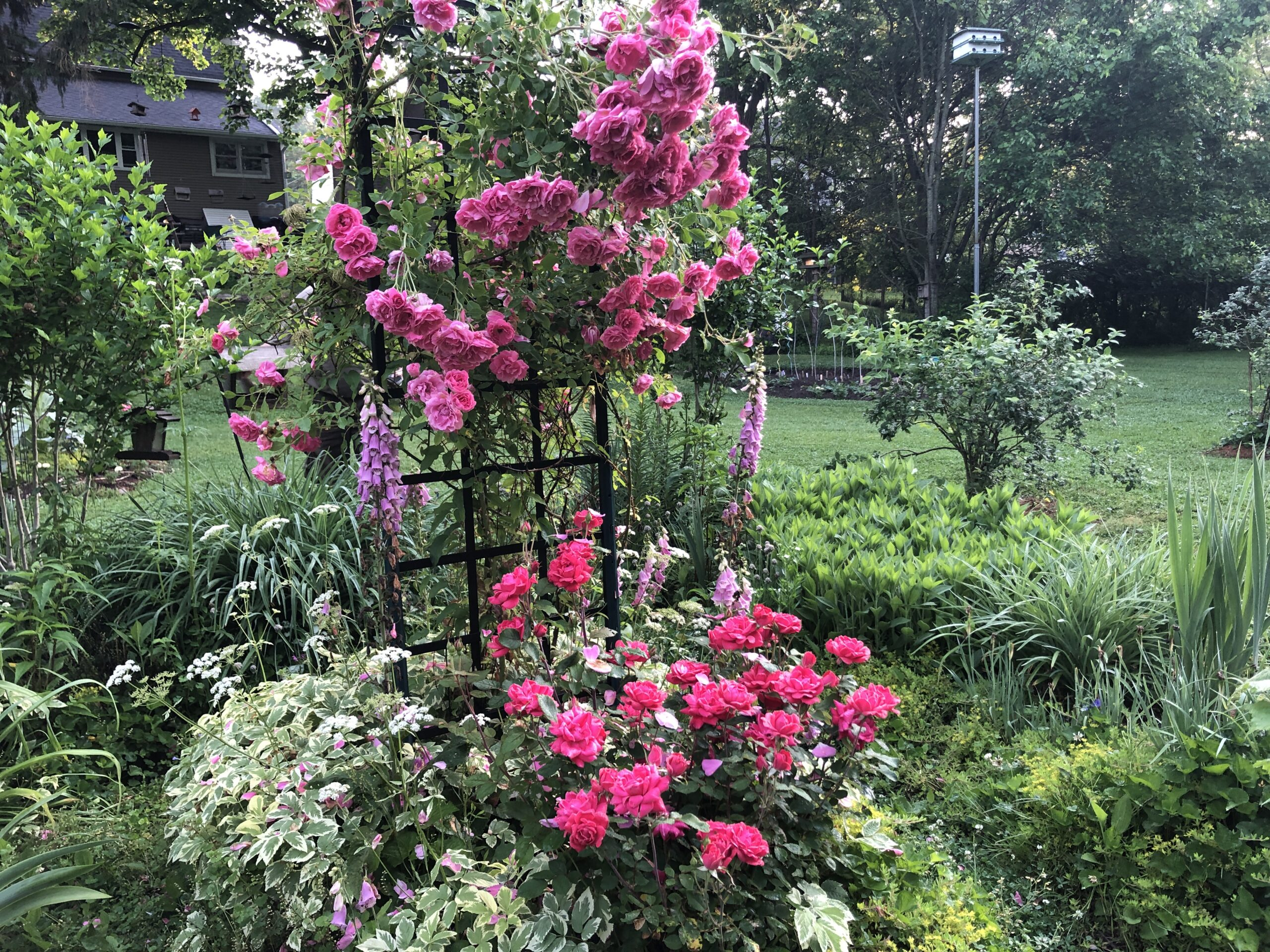 lots of pink flowers growing together