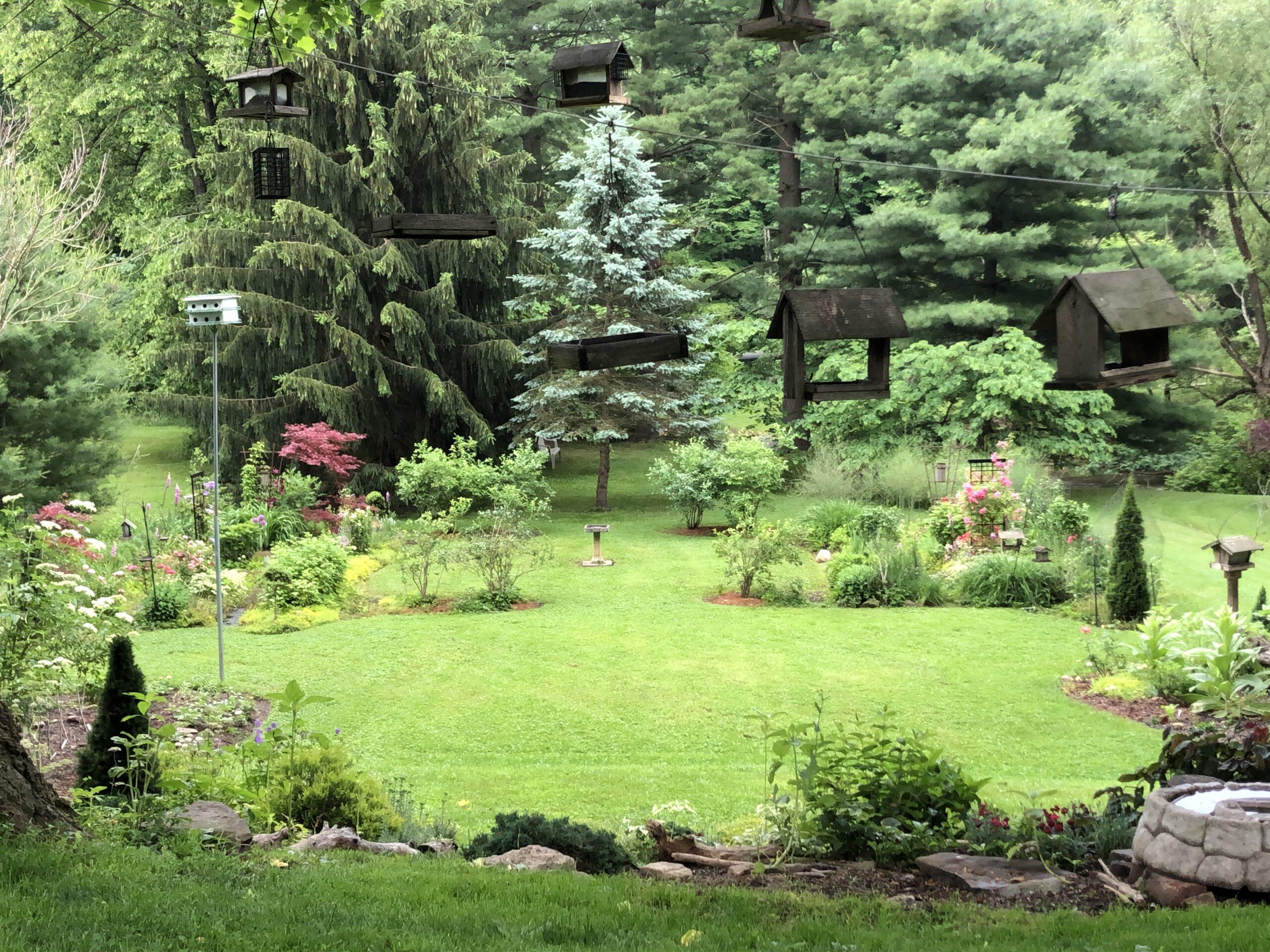 wide video of the full garden
