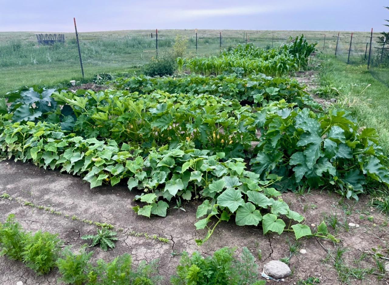 vegetable garden in the plains