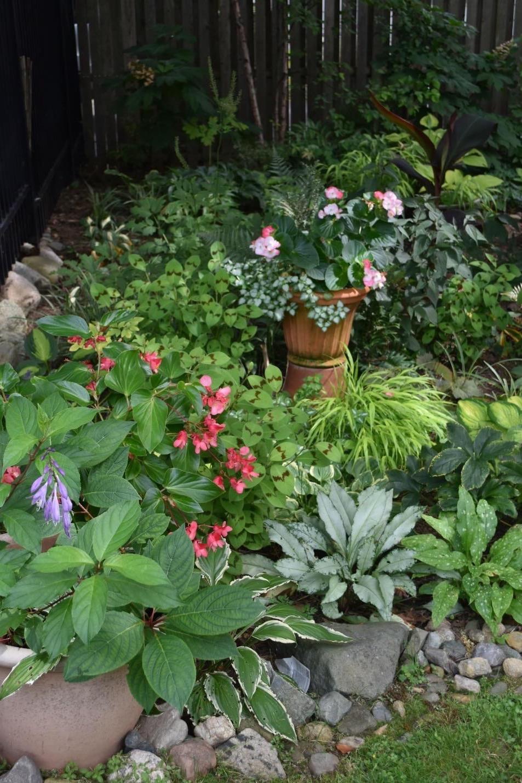 Shade garden with many foliage plants