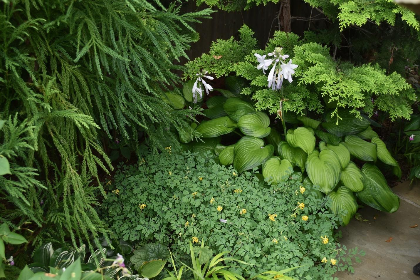 Shady garden with various foliage plants