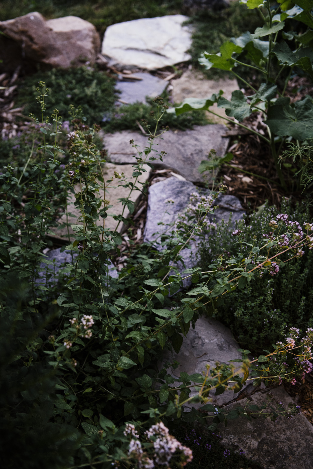 plants growing around stepping stones