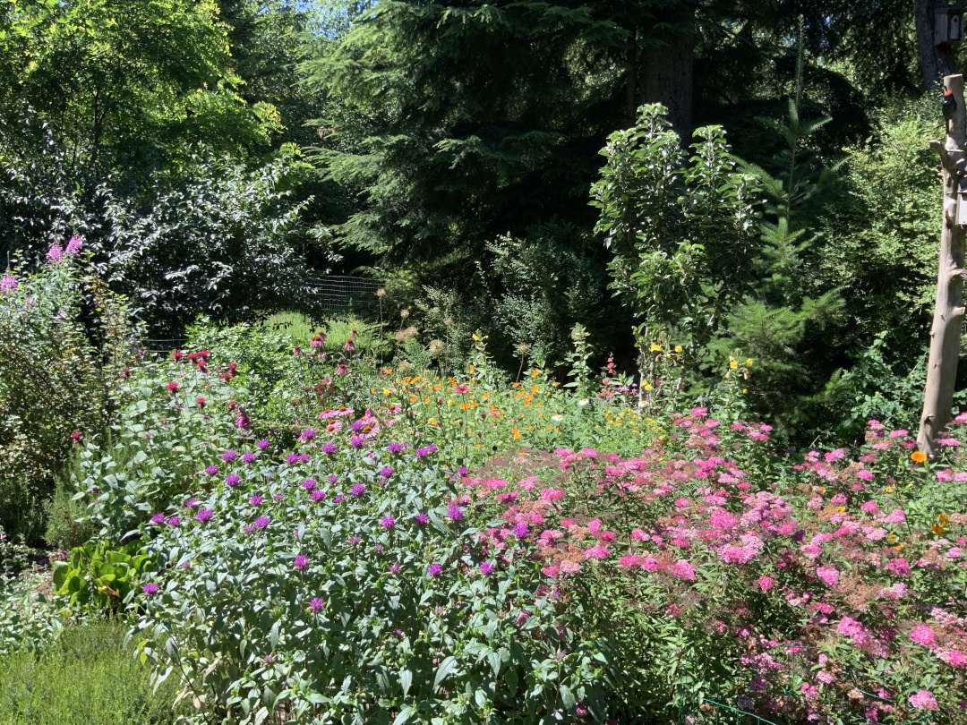 garden full of plants with pink flowers