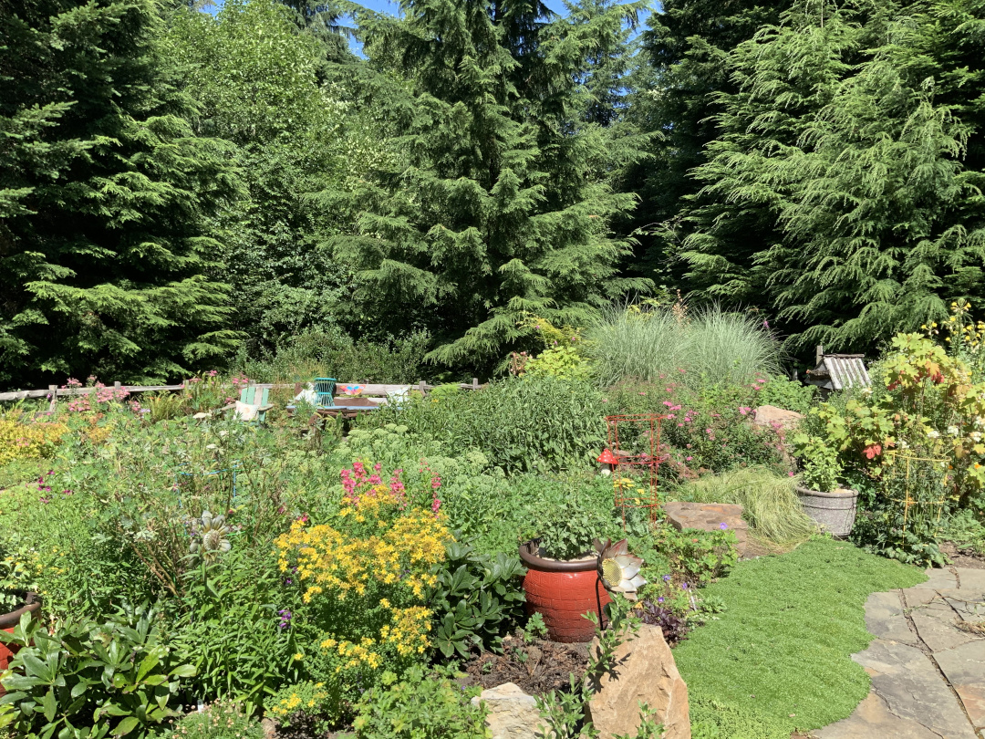 garden with many conifers in the background