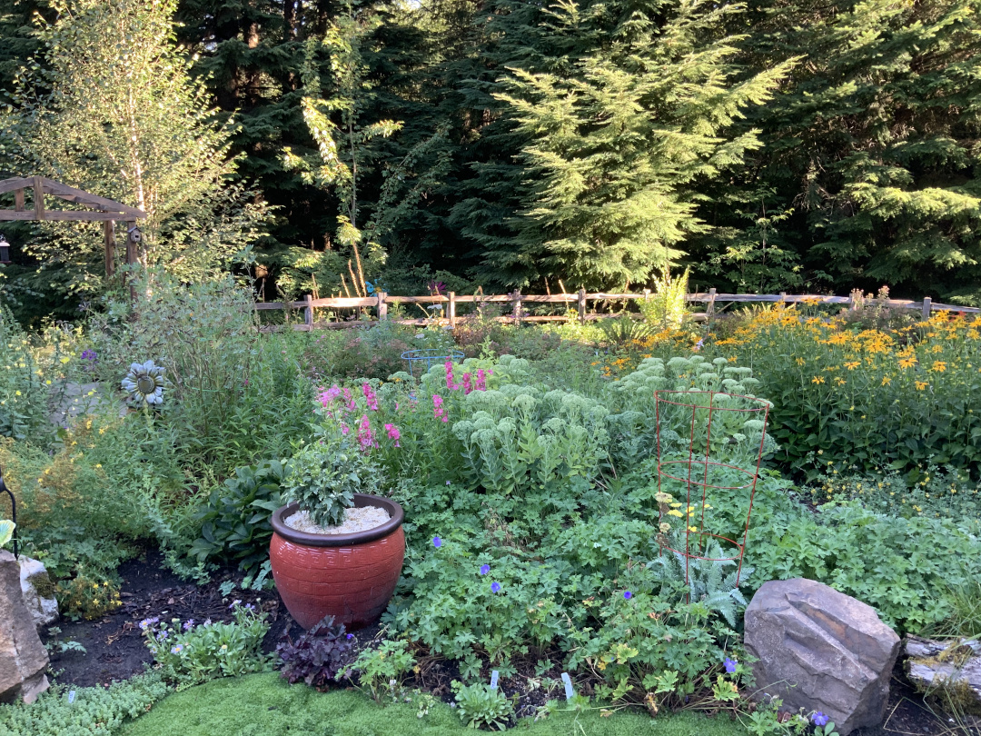 garden full of perennials with wooden fence