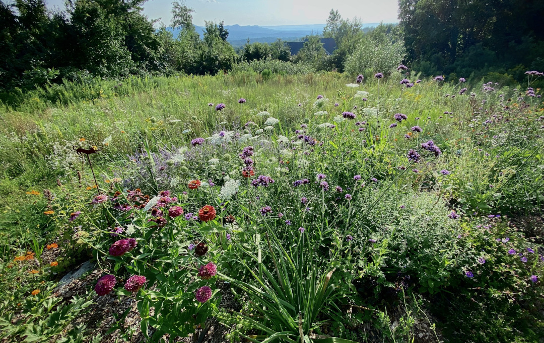 meadow garden with mountains in the background