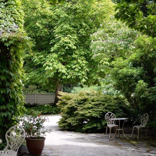 shady garden full of lush greenery
