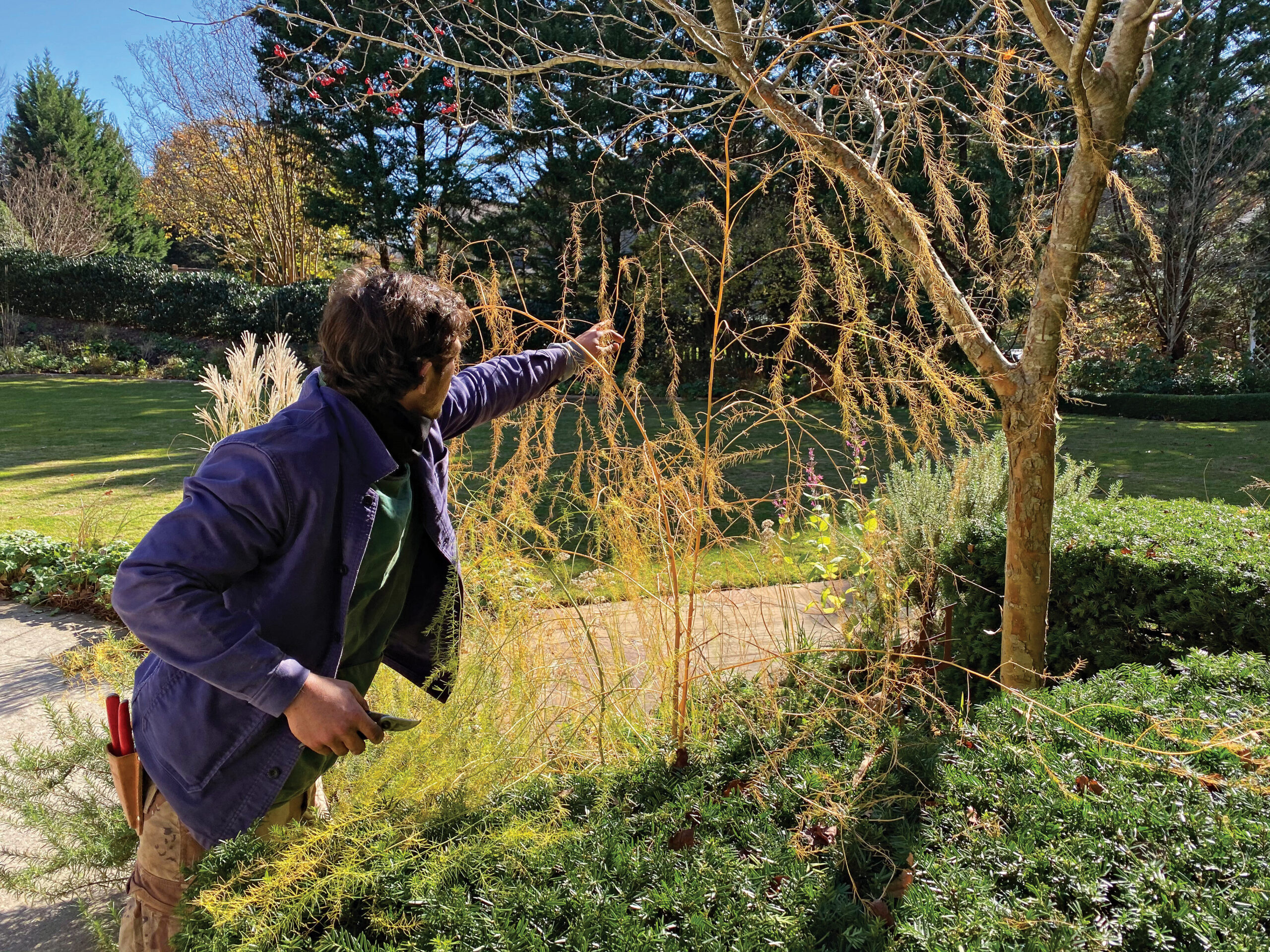gardener pruning perennials in fall