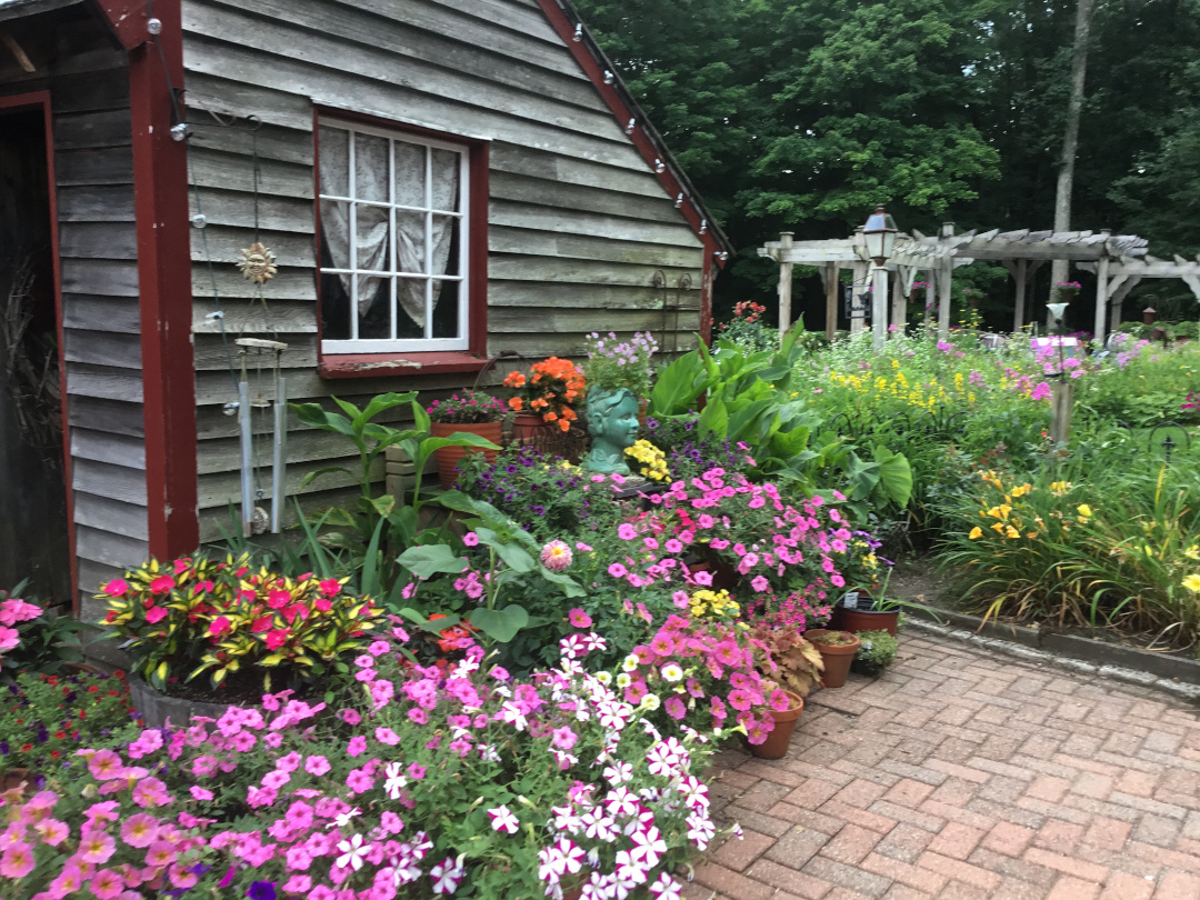 lots of flowering potted plants on a patio