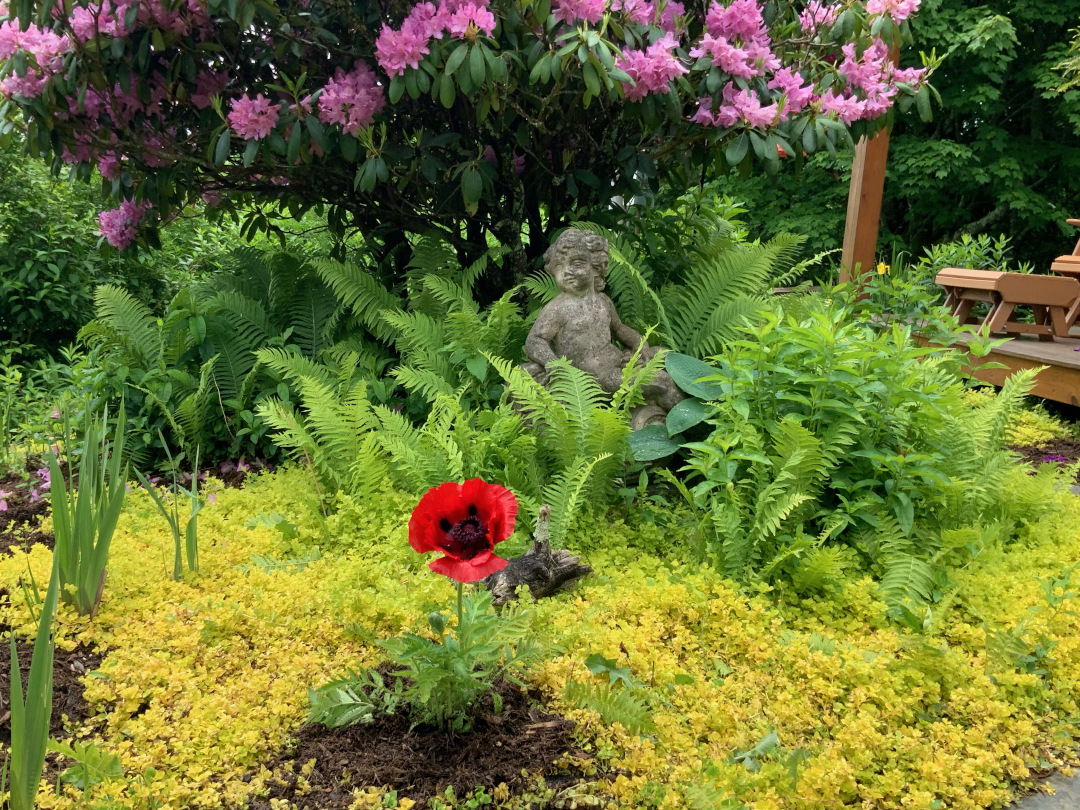 single red flower in front of ferns
