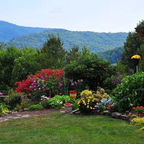 colorful garden with mountain view behind