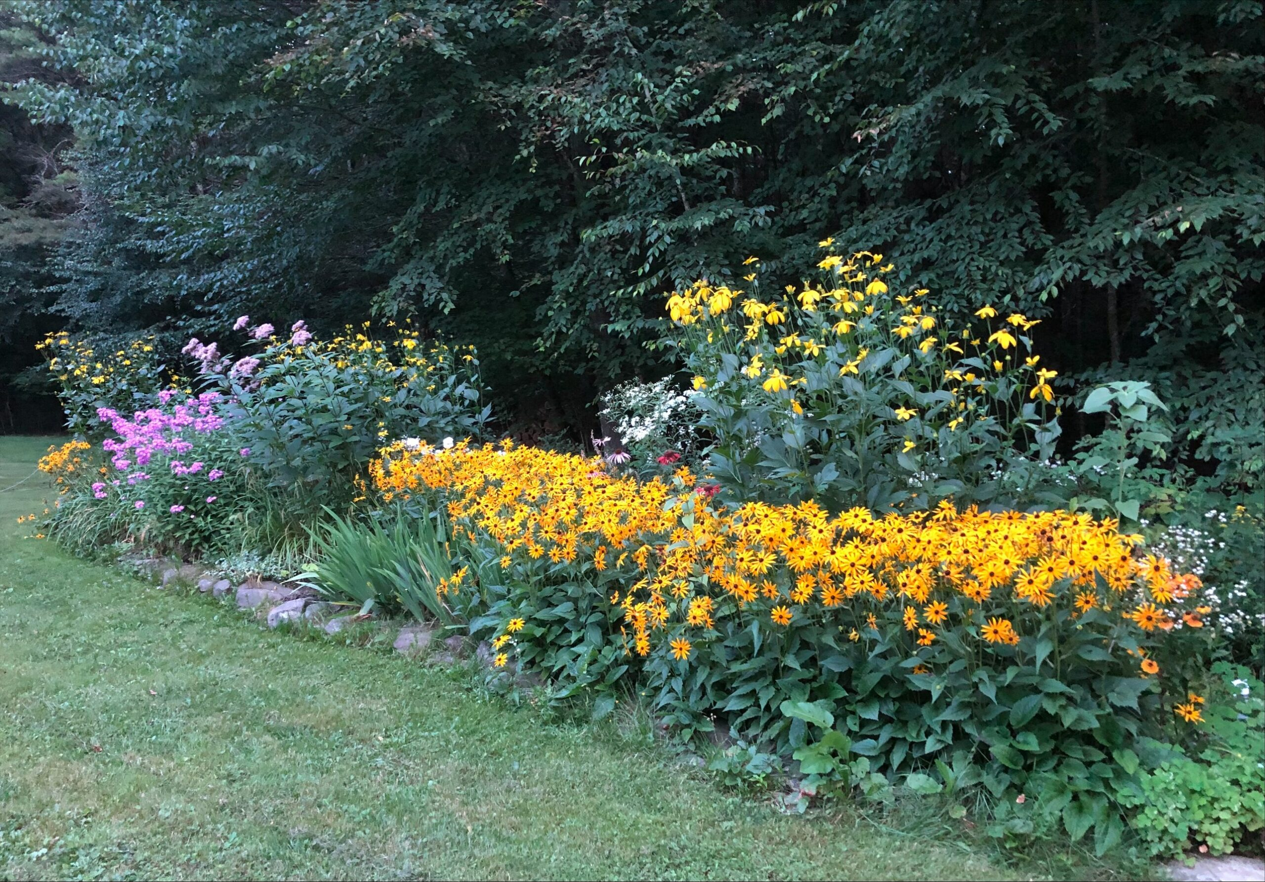 garden full of yellow flowers
