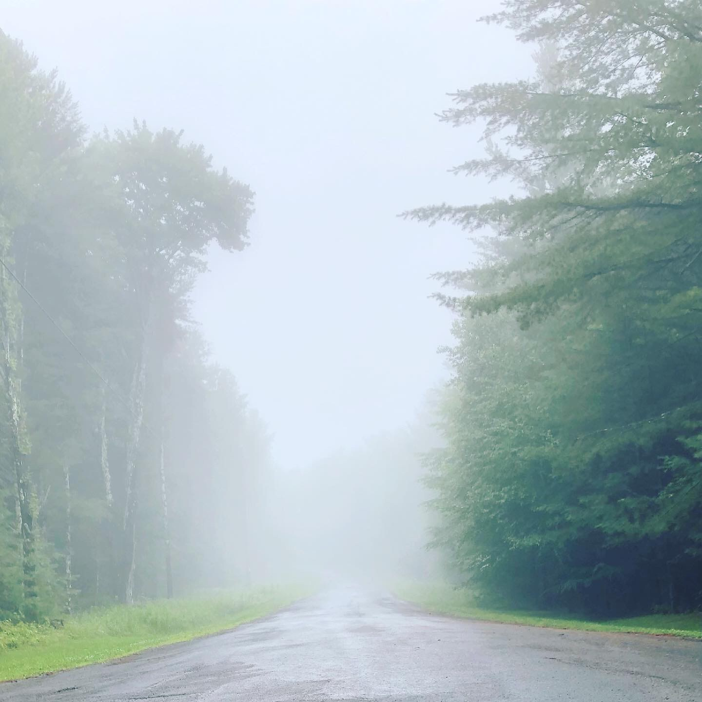 tree-lined street on a foggy day