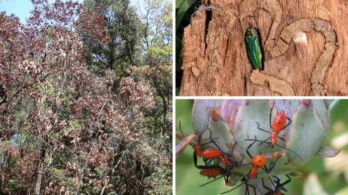 12 Common Garden Pests in the United States and How to Control Them