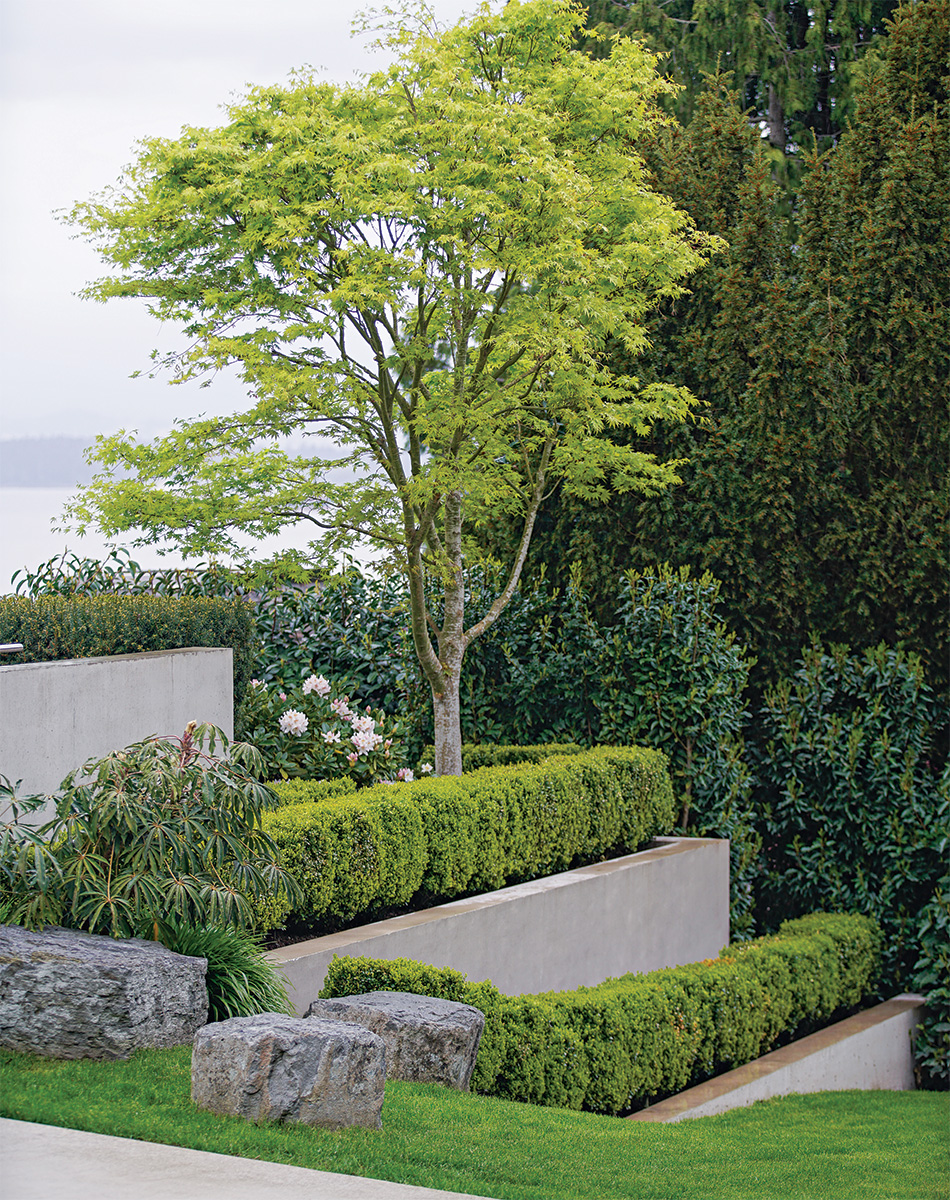 Layered hedging in front of tree