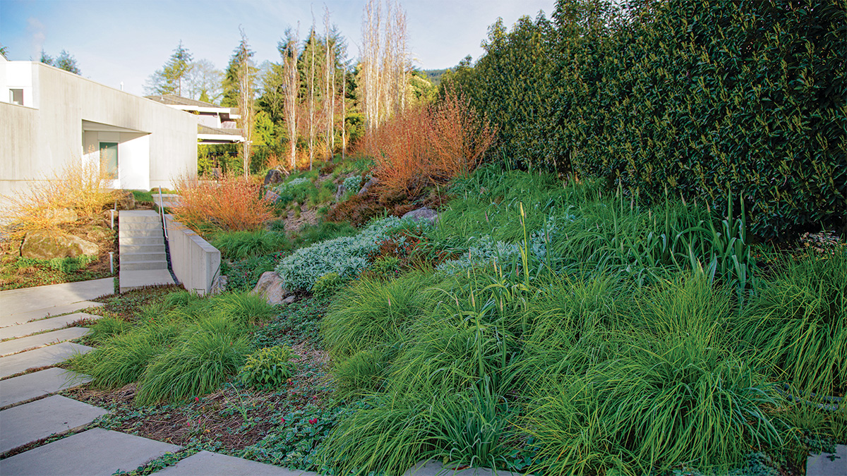 path leading to modern home lined with ornamental grass