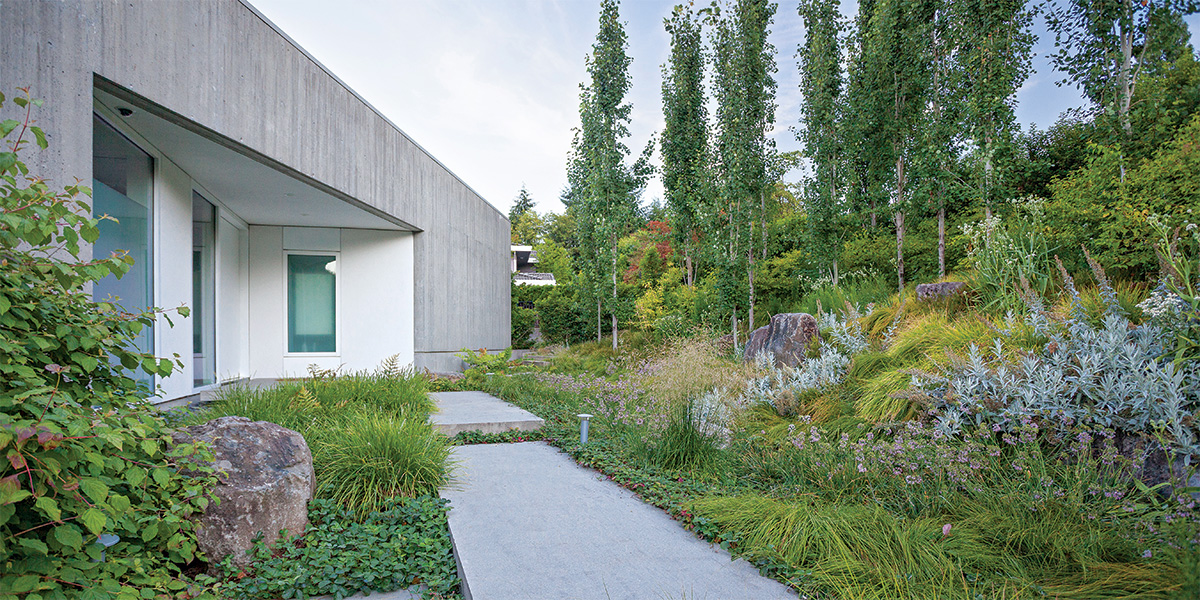 modern home with evergreen plants