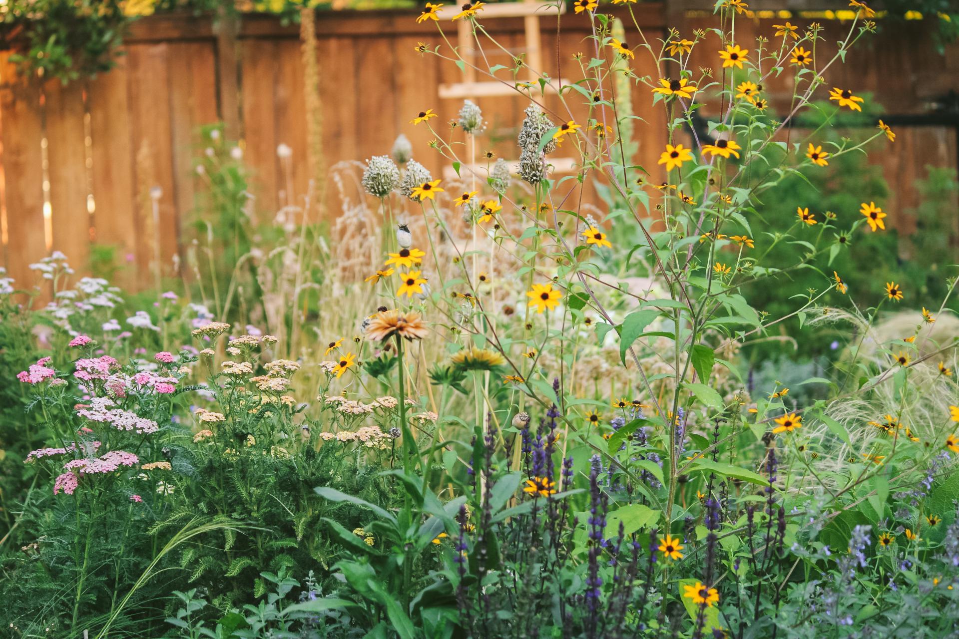 cottage garden full of flowers