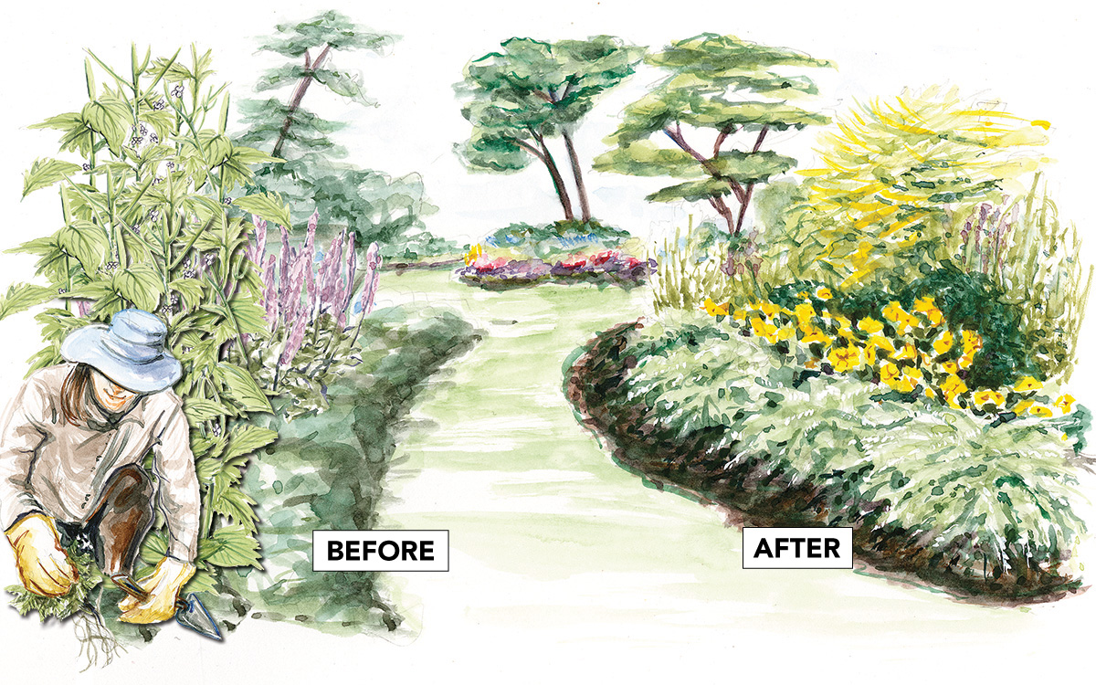 before and after removing invasive plants
