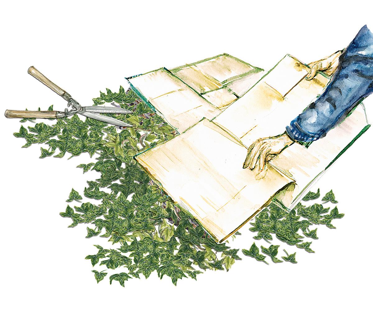 smothering invasive plants