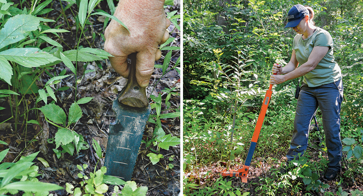 tools for digging out invasive plants