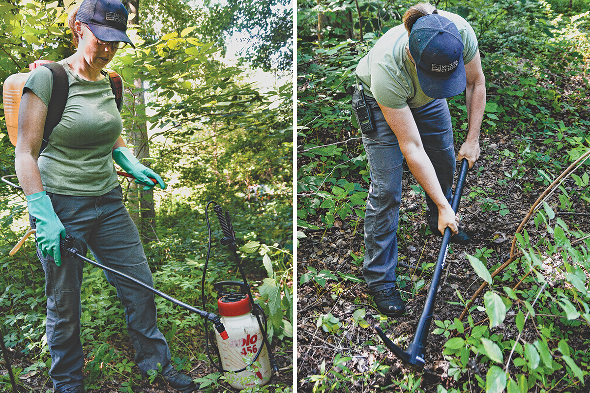 tools that kill invasive plants