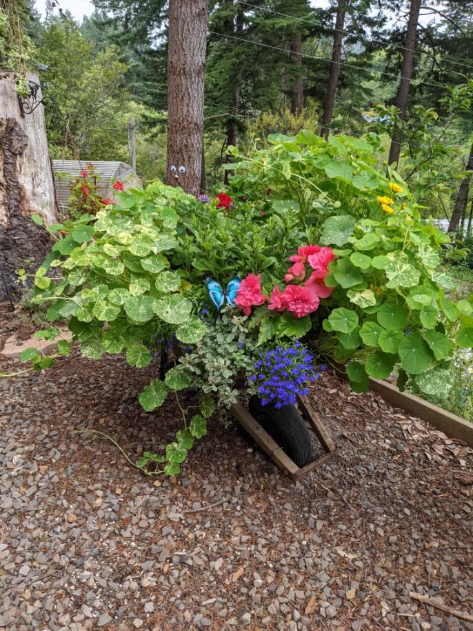 Wheelbarrow turned planter