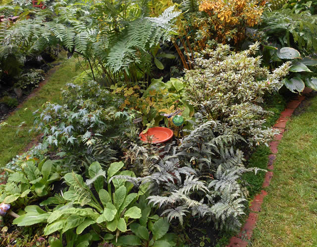 garden full of ferns view from above