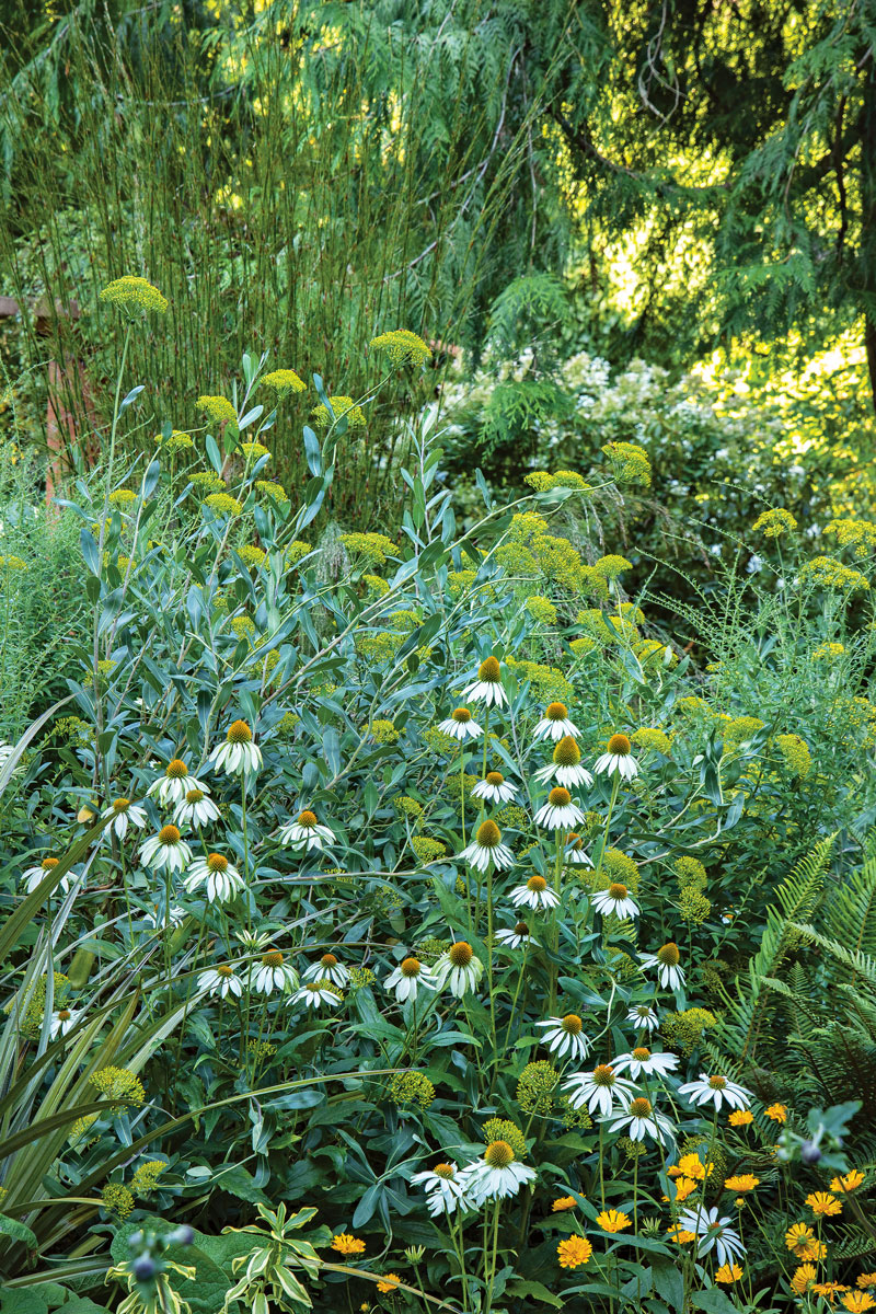 Well-placed plants have power. Anyone coming across this combination would have to stop and admire the way the 'White Swan' purple coneflower simultaneously adds contrast and harmony when set among shrubby hare's ear and 'Jethro Tull' coreopsis (Coreopsis 'Jethro Tull', Zones 5–9).